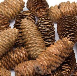 Natural Long Pine Cones