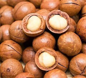 Macadamia Nuts In Shell - Human Grade - 500g