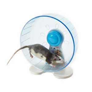 Rodent Wheel Large