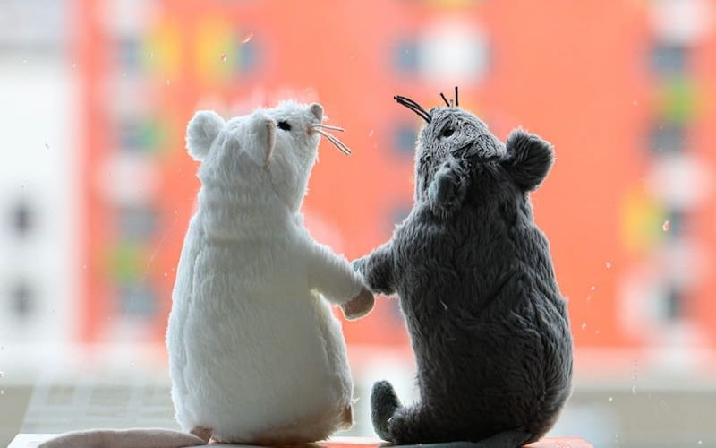 Why you should get TOYS for your pet rat