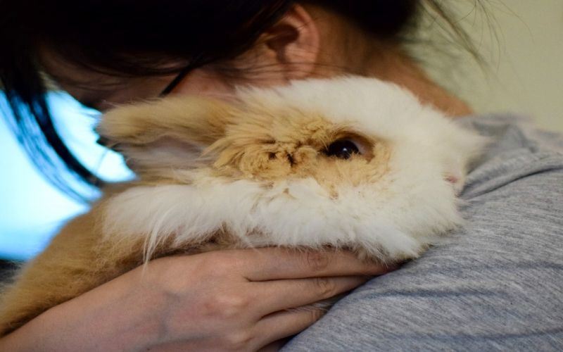 Feeding and caring for your pet rabbit