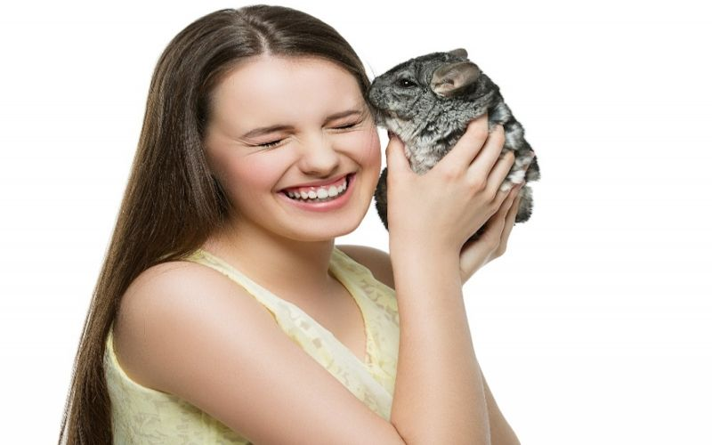 All you need to know about Chinchilla care