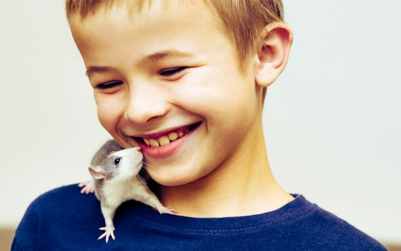 5 interesting facts about rats