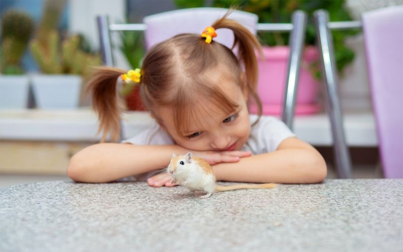 7 Things To Know About Keeping A Gerbil As A Pet