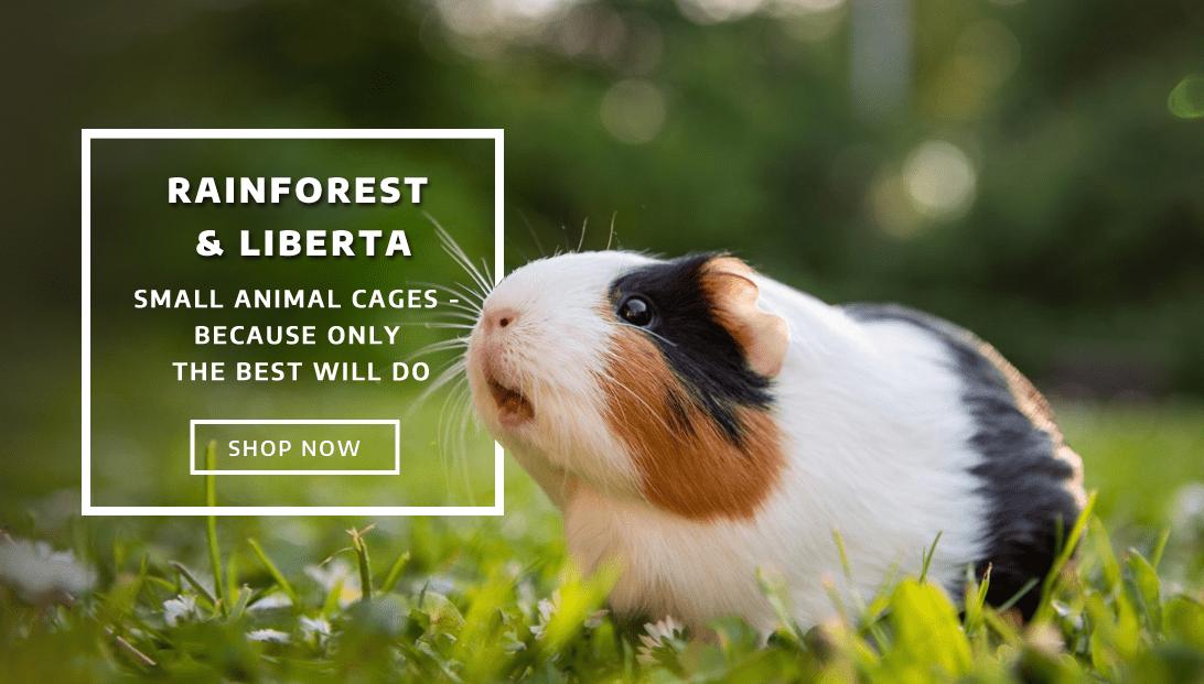 Rainforest and Liberta